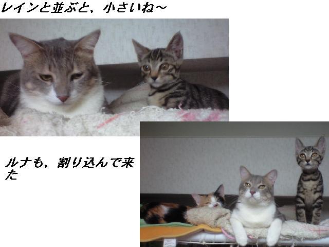 b0112380_1922783.jpg