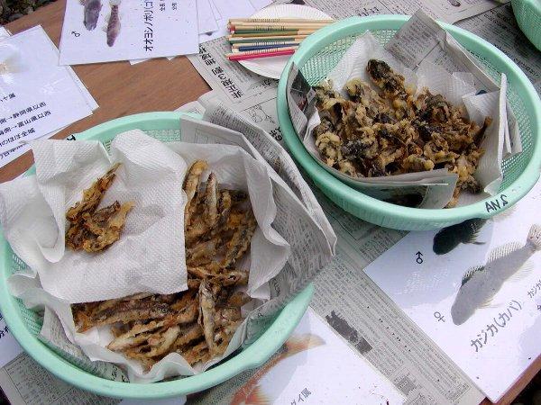 芦生自然学校 魚編 その2 食う_c0057390_23145035.jpg