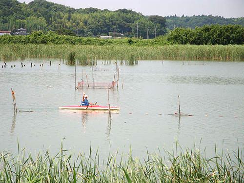 ついに利根川へ! (花見川カヌー探検 その3)_c0137404_923161.jpg