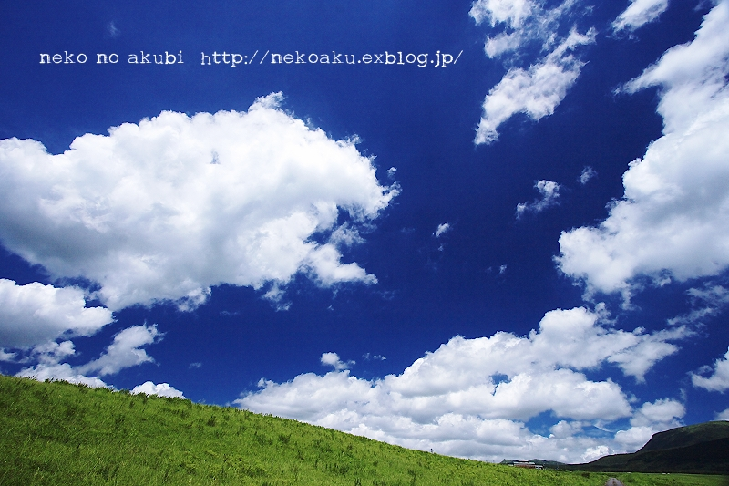 b0003512_9503813.jpg
