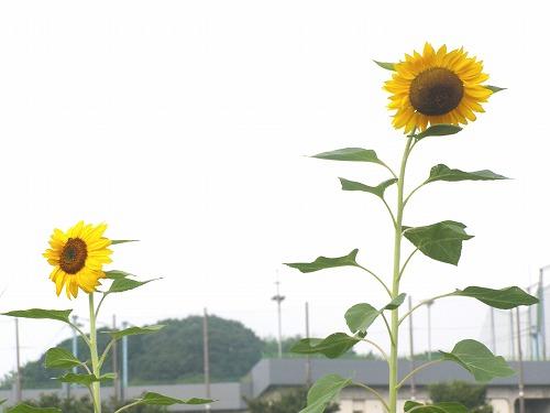 夏に秋を感じ_d0147812_1571858.jpg