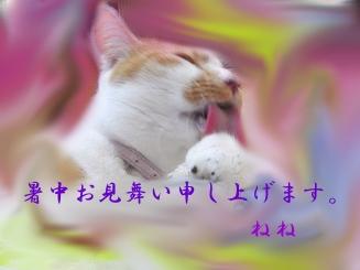 b0077117_15562345.jpg