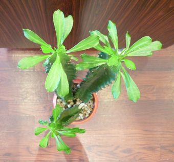 植物日記 Ⅴ   by ヌーヴェルブティック_f0076925_1817713.jpg