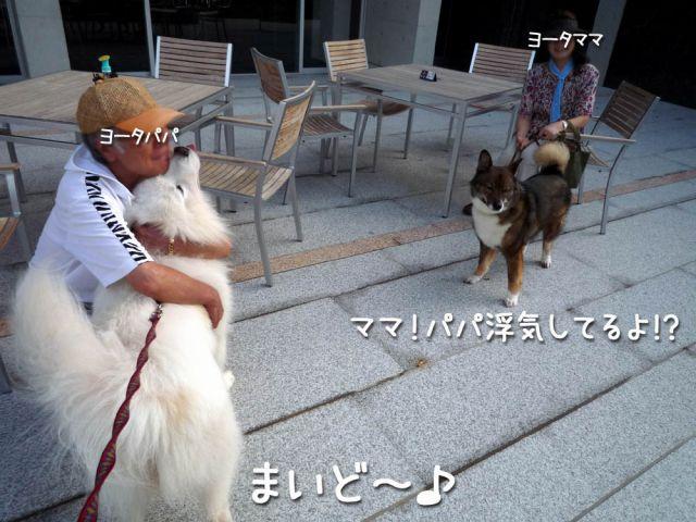 朝のモフモフ売り_c0062832_16503164.jpg