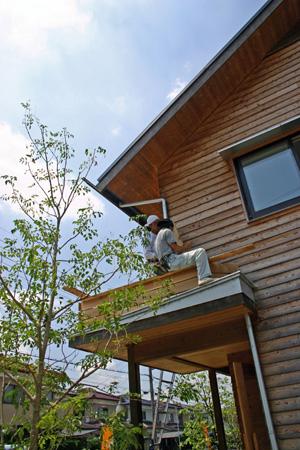 屋根の上にも緑を_d0082238_2304747.jpg
