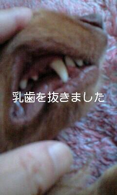 d0085160_18151212.jpg