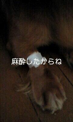 d0085160_18151226.jpg