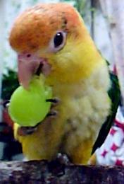 鳥好きさん♪よろしくです♪_b0051666_15112275.jpg