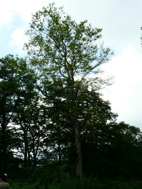 7月26日 立山自然観察第1日・その1_e0145782_1621626.jpg