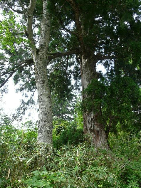 7月26日 立山自然観察第1日・その1_e0145782_1625230.jpg