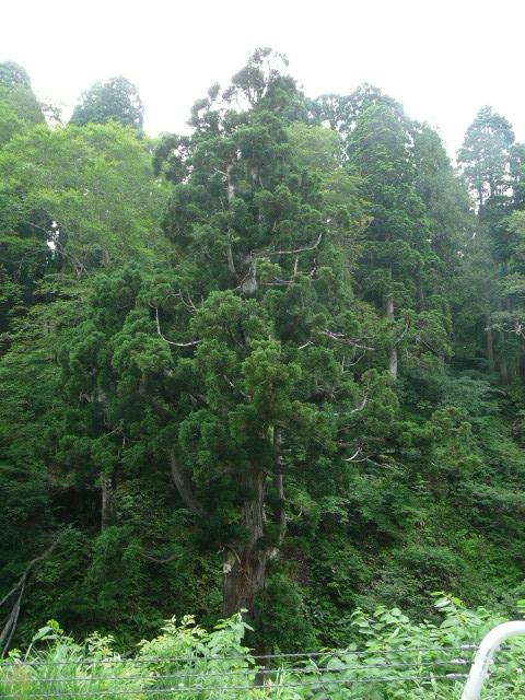 7月26日 立山自然観察第1日・その1_e0145782_1631481.jpg