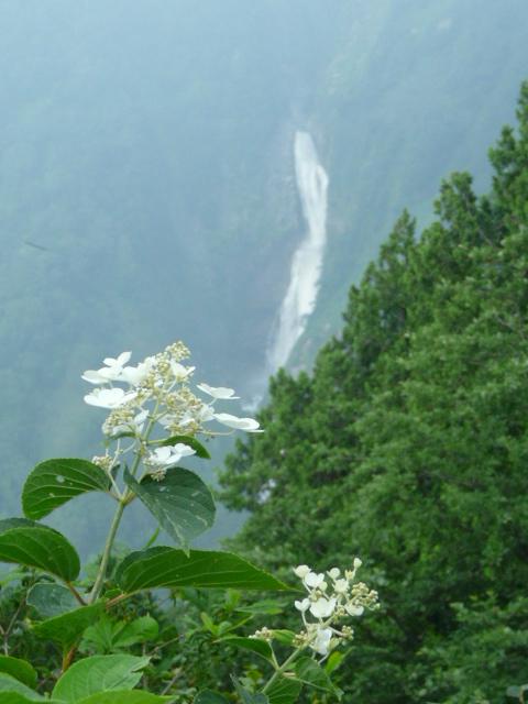 7月26日 立山自然観察第1日・その1_e0145782_1665458.jpg