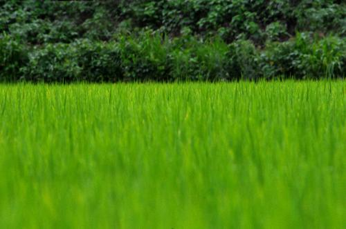 緑のじゅうたん。_b0133890_15444246.jpg