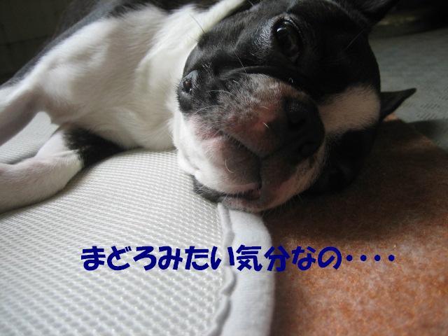 b0136300_22203113.jpg