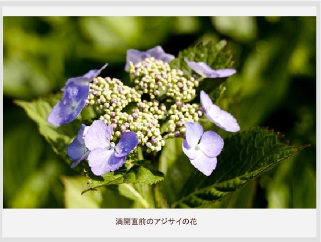 b0159210_1714317.jpg