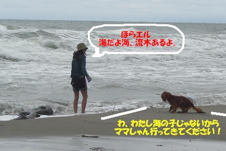 追記~ われは海の子 白波の_f0170713_12351190.jpg