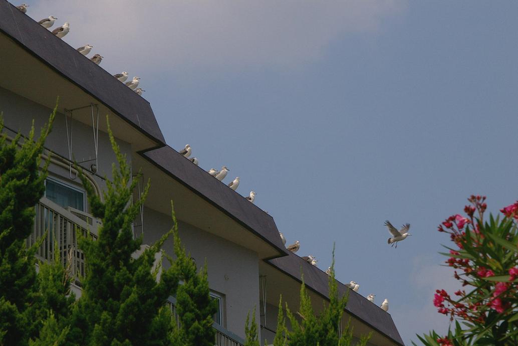 屋根の上の カモメ No.5_d0039021_18263191.jpg
