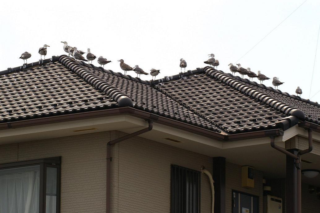 屋根の上の カモメ No.5_d0039021_18271566.jpg