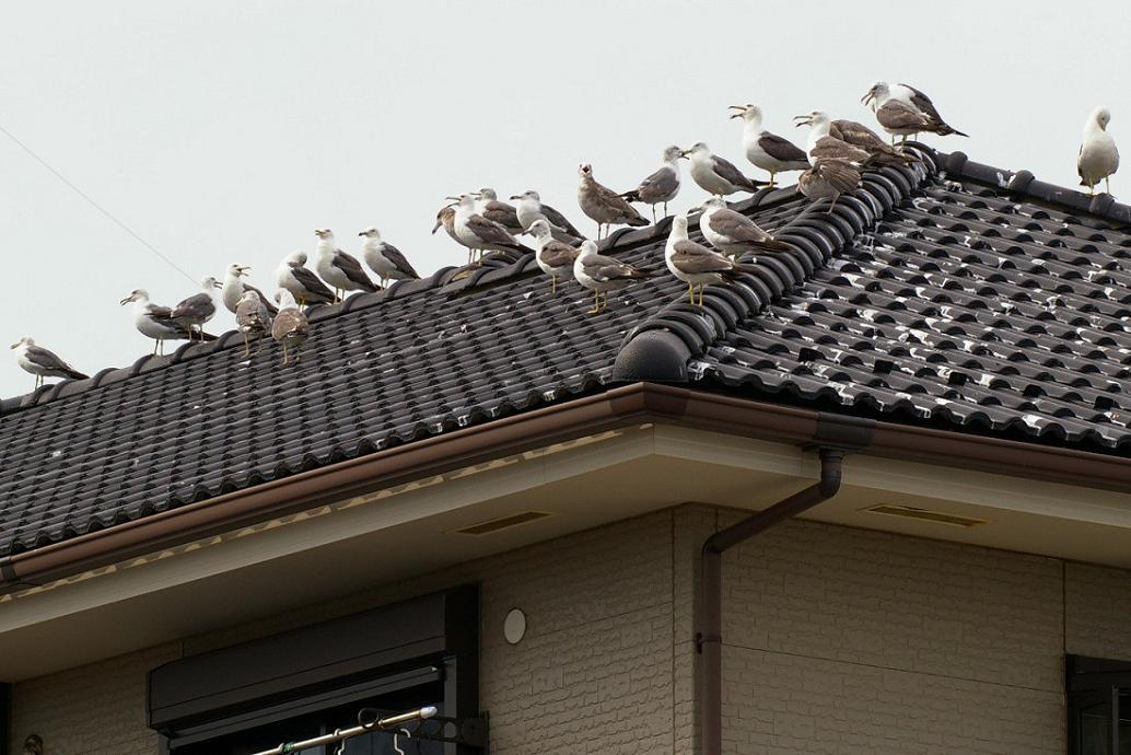 屋根の上の カモメ No.5_d0039021_18272437.jpg