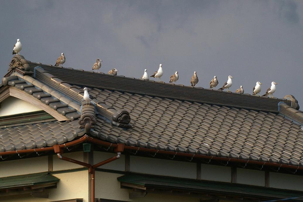 屋根の上の カモメ No.5_d0039021_18274886.jpg