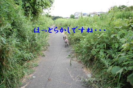 c0130324_22414822.jpg