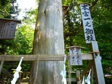 入笠湿原 _d0127634_15163081.jpg