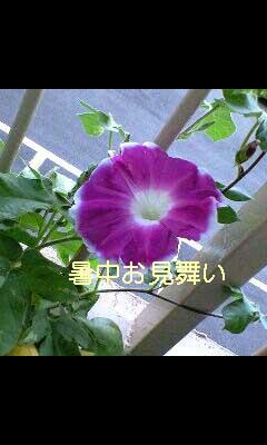 暑中お見舞い_d0147944_7445373.jpg