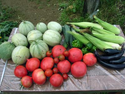 嬉しい収穫が続く_c0063348_942921.jpg