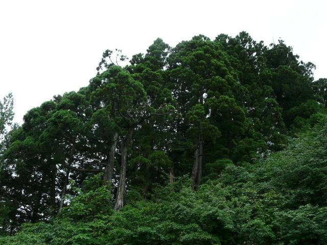 7月28日 立山自然観察第3日(最終日)_e0145782_17241577.jpg