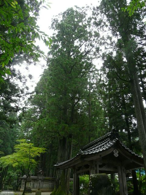 7月28日 立山自然観察第3日(最終日)_e0145782_17252446.jpg