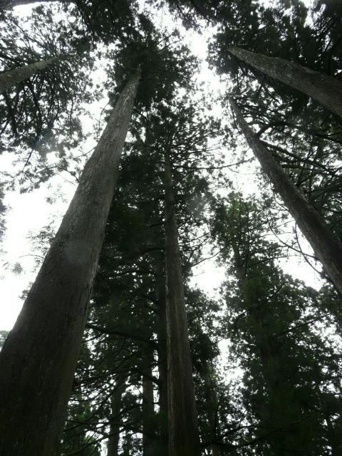 7月28日 立山自然観察第3日(最終日)_e0145782_17262315.jpg