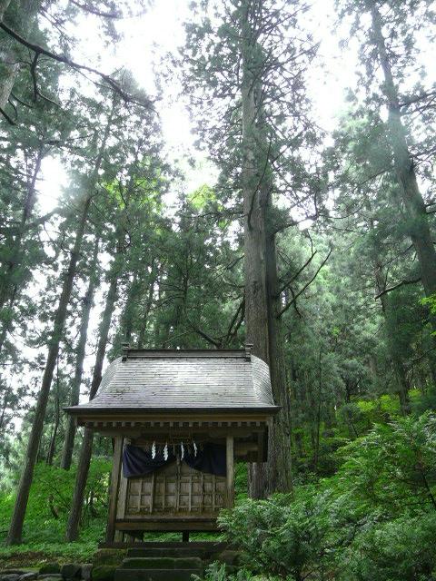 7月28日 立山自然観察第3日(最終日)_e0145782_17264081.jpg