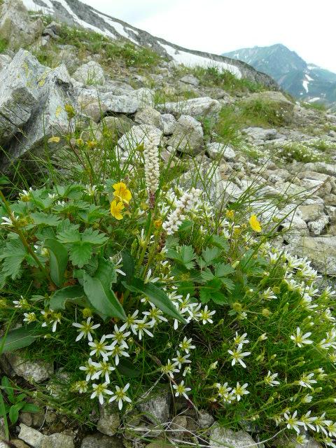 7月27日 立山自然観察第2日・その3_e0145782_540381.jpg