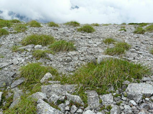 7月27日 立山自然観察第2日・その3_e0145782_5424886.jpg
