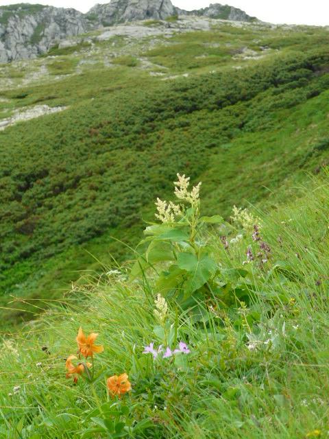 7月27日 立山自然観察第2日・その2_e0145782_5533991.jpg