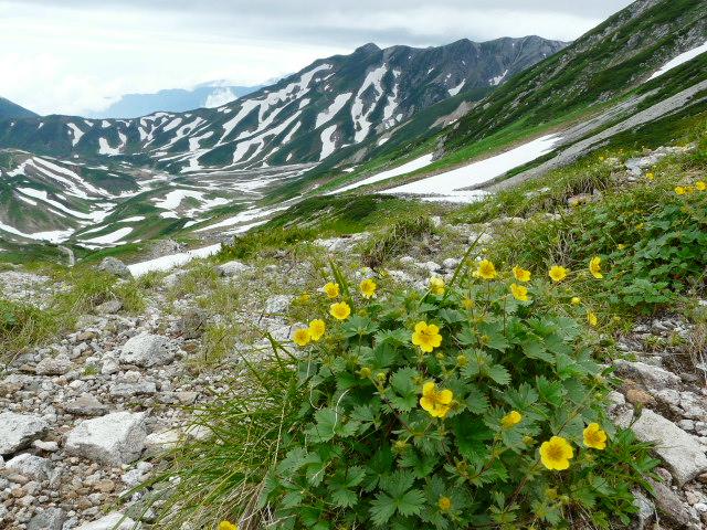 7月27日 立山自然観察第2日・その1_e0145782_62778.jpg