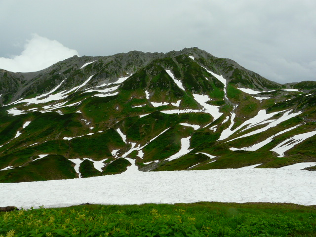 7月27日 立山自然観察第2日・その1_e0145782_675256.jpg