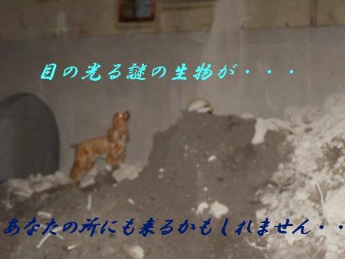 b0067012_1011513.jpg