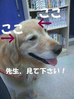 b0127531_2119246.jpg
