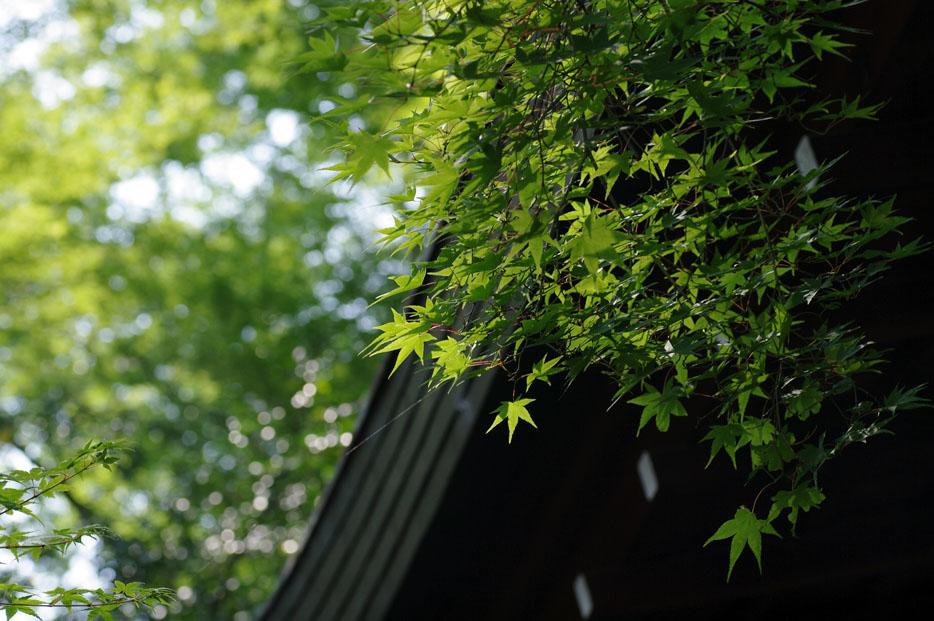 夏写真シリーズ Ⅱ_f0152550_238442.jpg