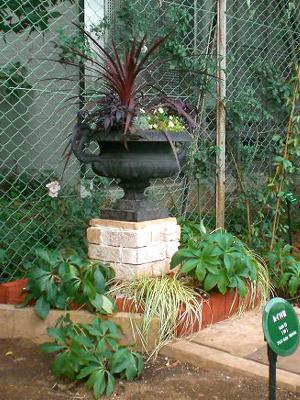 開庭『駒場 ばらの小径』 素敵な鉢のコーナー_a0094959_2355110.jpg