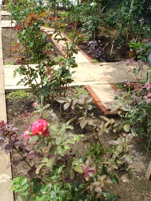 開庭『駒場 ばらの小径』 インド砂岩の小径_a0094959_3212449.jpg