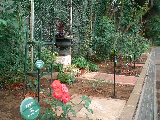 開庭『駒場 バラの小径』新しい名札の風景_a0094959_374718.jpg