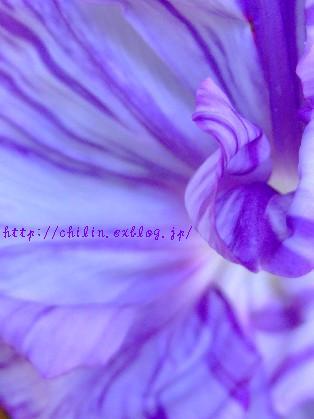 ・・・♪_e0003966_22224481.jpg
