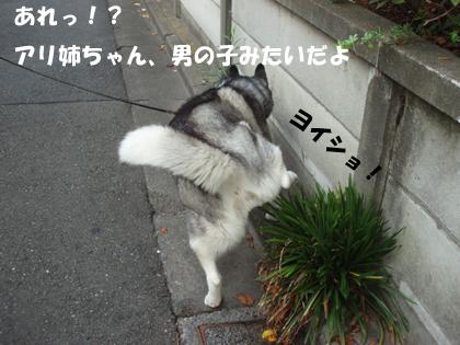 c0161772_1412326.jpg
