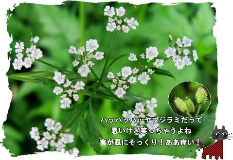 f0137096_11181251.jpg
