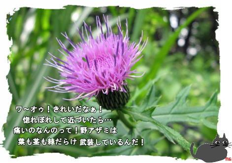 f0137096_1125264.jpg