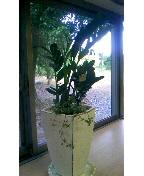 d0037001_2011344.jpg
