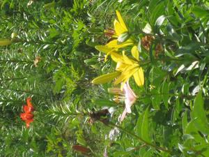 花、花、花・・・_c0157523_9111381.jpg