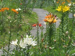 花、花、花・・・_c0157523_9112559.jpg